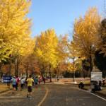 11月22日つくばマラソン(フル)セカンドベスト2:47:14